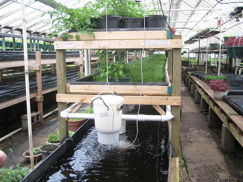 Ciencia y tecnolog a acuaponia cultivar plantas y peces for Koi pond builders cape town