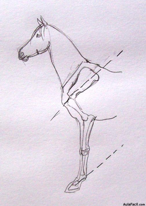 ⏩Anatomía del caballo - Inclinación de ejes - Dibujo de Caballos ...