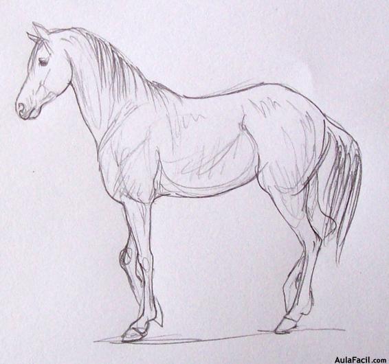 Curso gratis de Dibujo de Caballos - Las edades del caballo ...
