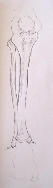 Curso gratis de Dibujo Anatomía - El esqueleto XX | AulaFacil.com ...