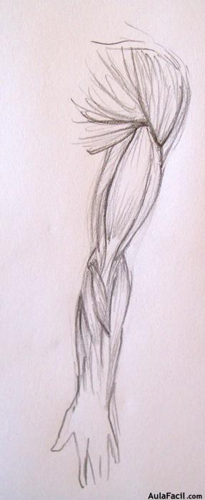 dibujos para colorear los musculos de las piernas