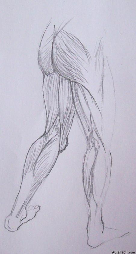 ⏩Los músculos VII - Dibujo Anatomía | AulaFacil.com: Los mejores ...