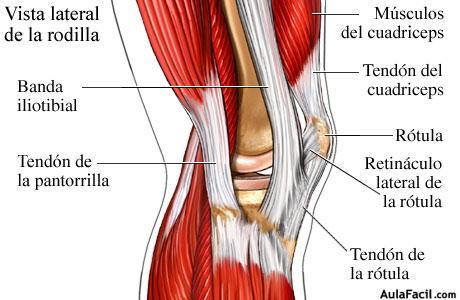 ⏩Rodilla. Anatomía básica - Fisioterapia | AulaFacil.com: Los ...