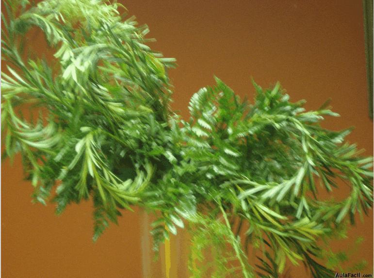 ⏩Pasos básicos - Arreglos florales con flores naturales   AulaFacil ...