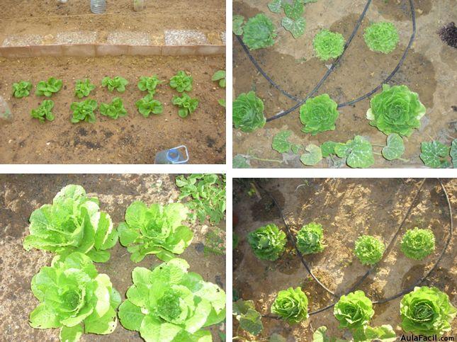 huerto en tu jardín