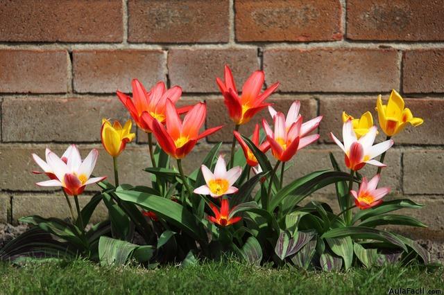 Curso gratis recomendado de jardiner a - Como aprender jardineria ...