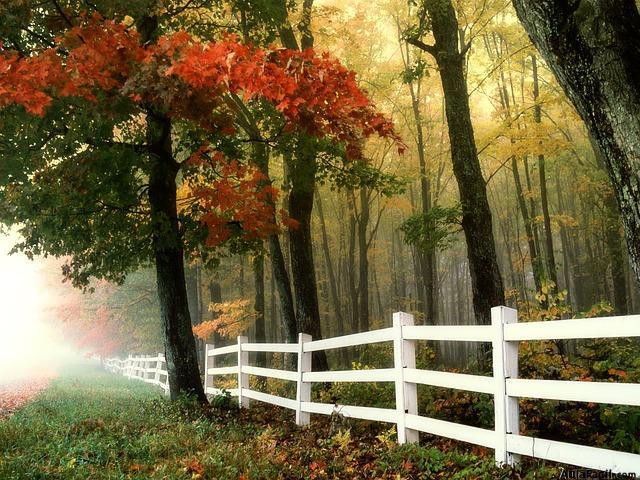 otoño por la mañana
