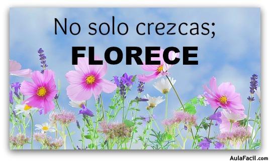 No solo crezcas; FLORECE