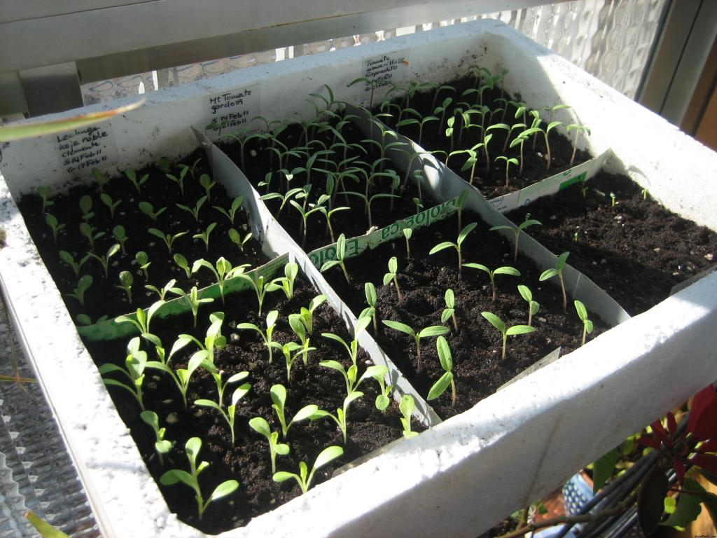Curso gratis de introducci n a la huerta educativa - Tierra para semilleros ...