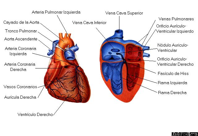 Curso gratis de Infarto de Miocardio - Infarto de Miocardio ...
