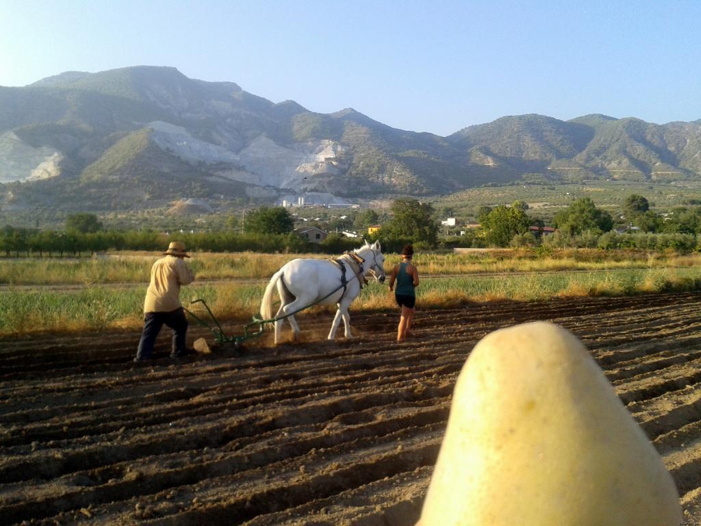 Cosecha de papas en Hortigas