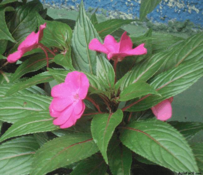 Curso gratis de jardiner a plantas con flores for Jardineria y plantas