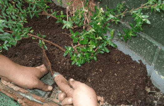 Curso gratis de jardiner a plantas con flores abono de for Abono para las plantas de jardin