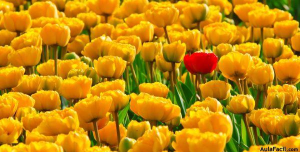 tulips 15155 960 720
