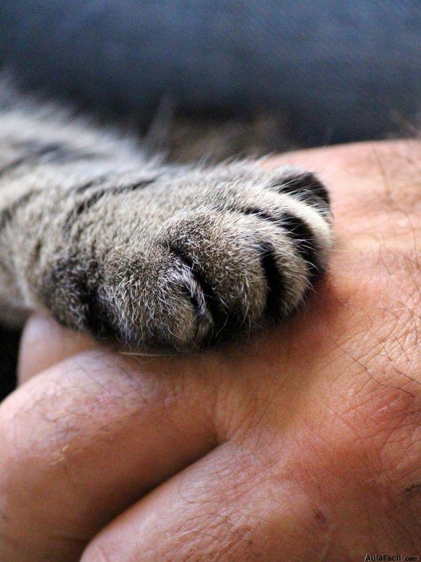 cats paw 1375792 1920