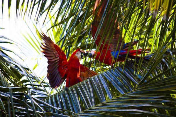 enfermedades aves exoticas