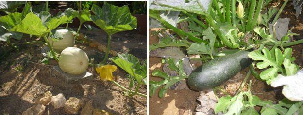 Curso gratis de huerto casero plantar cuidar y cultivar - Que plantar en el huerto ...