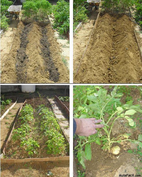 Curso gratis de huerto casero plantar cuidar y cultivar for Como cultivar patatas