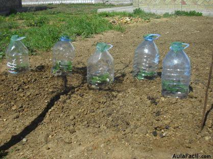 Plantar cuidar y cultivar Fresas Huerto Casero AulaFacilcom