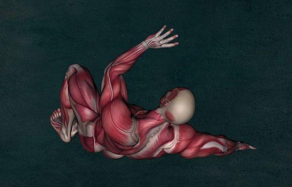 anatomy 2148324 640