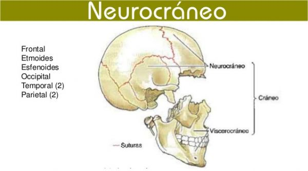 NeurocreaneoAulaFacil