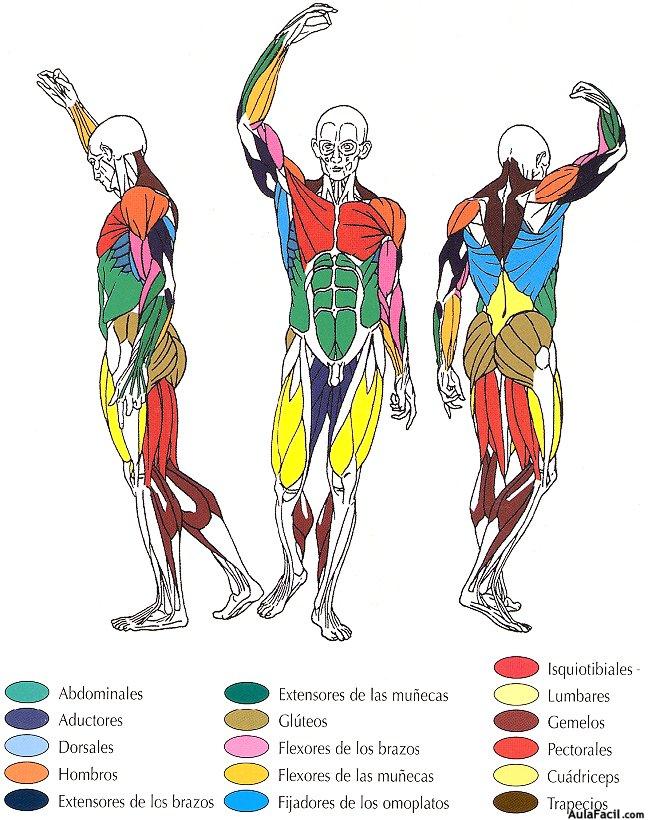⏩La flexibilidad - Preparación física y planificación en el fútbol ...